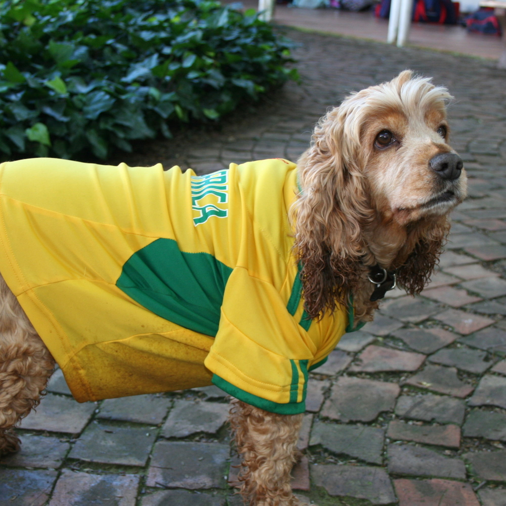 Pippa a st marys dog and avid soccer supporter